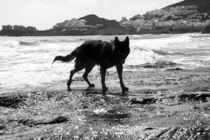 Big dog on the rocky beach by Jessy Libik