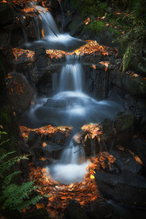 Clyne Park waterfalls by Leighton Collins