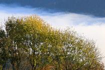 Herbstfarben und Nebel by Bernhard Kaiser