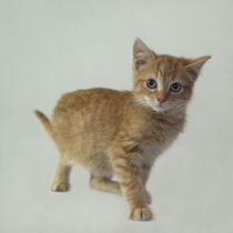 Kleine Katze / 11 von Heidi Bollich