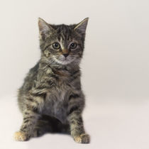 Kleine Katze / 10 von Heidi Bollich