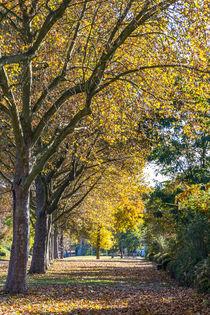 Herbstbäume von mroppx