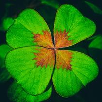 Luck - Glück by Ralph Patzel
