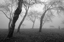 Autumn Walk by Jim Corwin