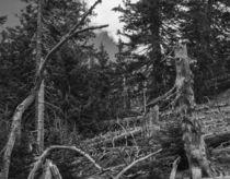 Dead wood von Nicolai Golsner