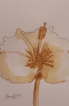 Coffee-flowers-iv