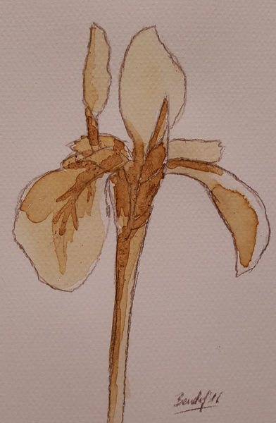 Coffee-flowers-xiv