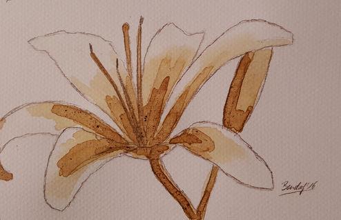 Coffee-flowers-xix