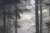 'Mystische Waldlandschaft' von Bernhard Kaiser