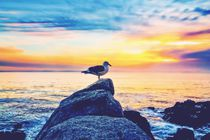 bird on the stone with ocean sunset sky background by timla