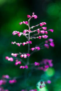 zartes pink blümelein von mroppx