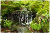 Details des Waldes von Sandra  Vollmann