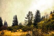 Herbstliche Bergtannen von Nicc Koch