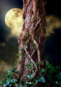 A Hunters Moon von CHRISTINE LAKE