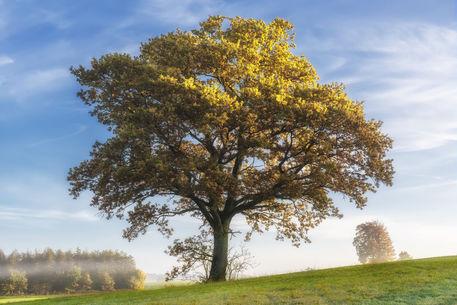 Tree-973016