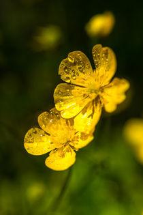 'gelbe blüten nach dem sommerregen' von mroppx