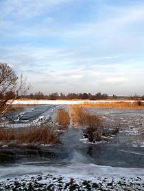 Überfluteter & vereister Weg zur Oder... von voelzis-augenblicke