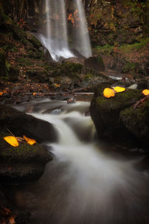 Melincourt Waterfalls in Autumn by Leighton Collins