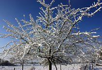 mit Schnee geschmückter Baum  von Martina Lender-Frase