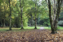Early Autumn by David Tinsley