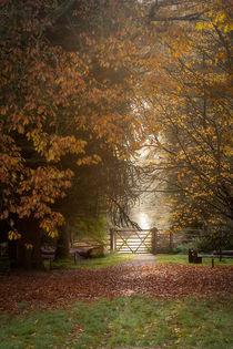 Autumn Gateway II by David Tinsley