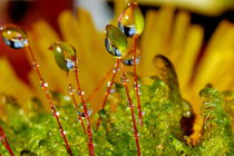 Moss after rain von Yuri Hope