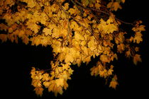 Nächtliche Herbststimmung von Simone Marsig