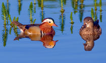 Pair of Mandarins by Keld Bach