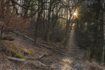 Illuminated Footpath by David Tinsley