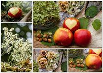 Herziger Herbst by photoart-mrs