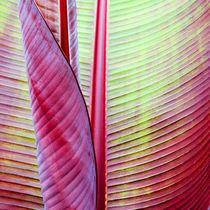Banana leaf by lescapricesdefilles