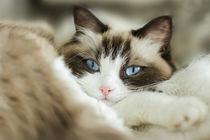 Blue Eyes by photoart-mrs