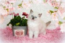 Flowers & Ragdoll von photoart-mrs