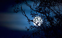 Spooky Moon Rising by Keld Bach