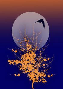 Luna by lescapricesdefilles