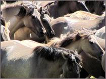 Grey Horses  von Sandra  Vollmann