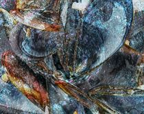 Muschelbank von Peter Norden