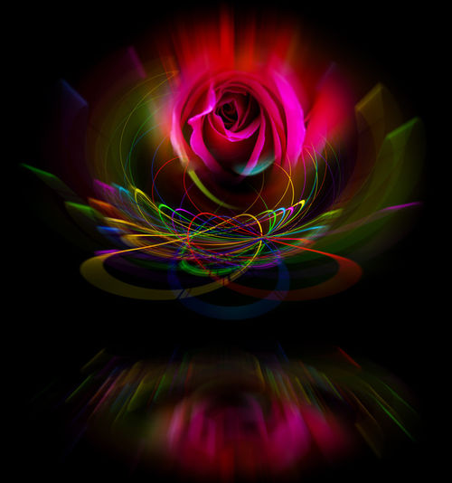 20150917-4-1112-38-rose