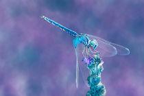 Libellenrobot von mroppx