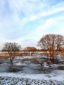 Eiskalte Schönheiten... von voelzis-augenblicke