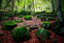 Mystischer Wald von Photo-Art Gabi Lahl