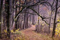 Zauberwald von Photo-Art Gabi Lahl