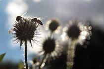 Bienen-Rendezvous by Angelika Thomson