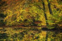Herbst am Teich von moqui