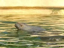 chilling seal by Zarahzeta ®