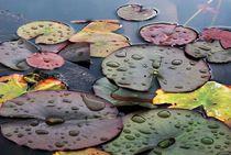 Teichfarben von Angelika Thomson
