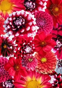 Red flowers von lescapricesdefilles