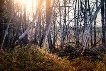 Autumn light von Photo-Art Gabi Lahl