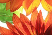 Suncolours von Angelika Thomson