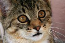 Katzenkind fragt von Angelika Thomson